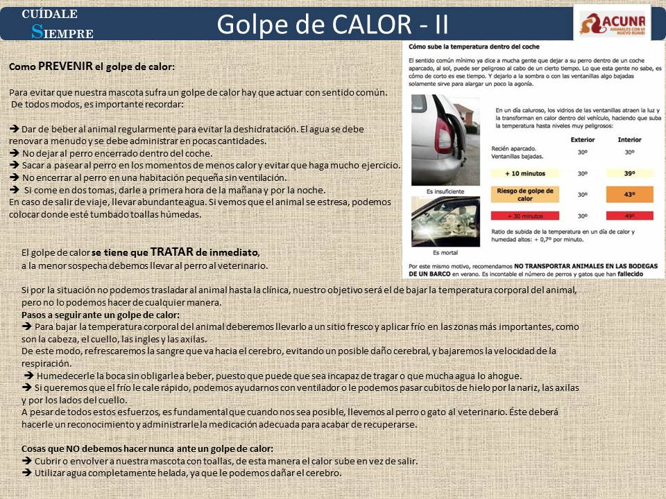 Prevenir y actuar ante el GOLPE DE CALOR en tu perro