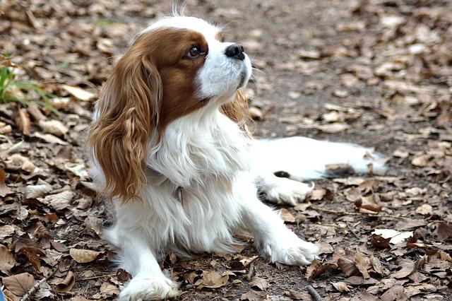 Nuestros perros tamaño pequeño