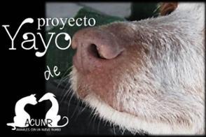 Nuestros proyectos. Proyecto Yayo.