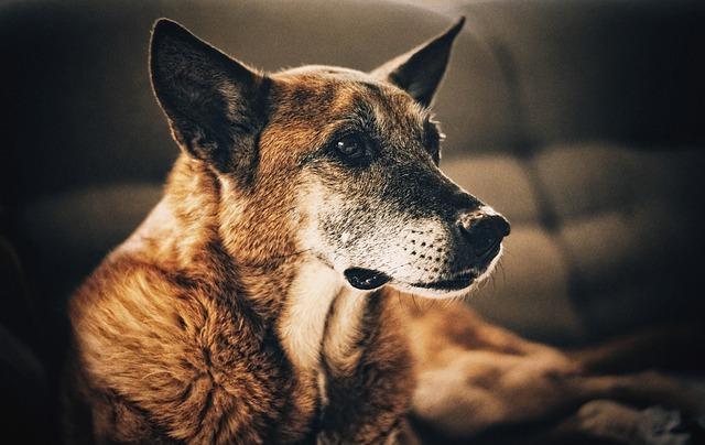 Nuestros perros de mas edad
