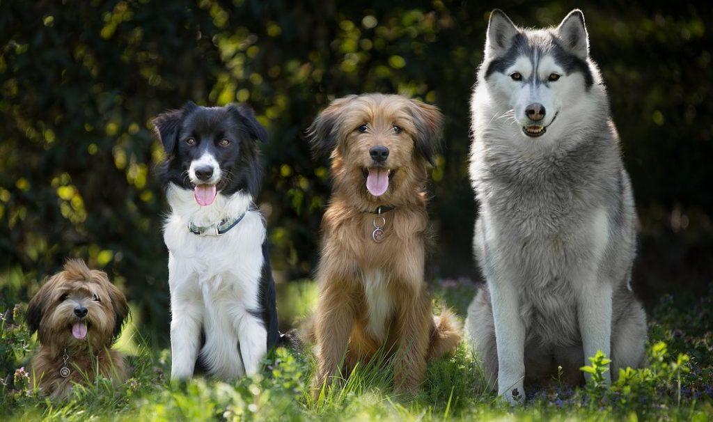Todos nuestros perros