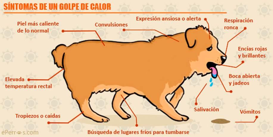Sintomas de un golpe de calor en un perro