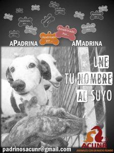 Apadrina - Amadrina acunr